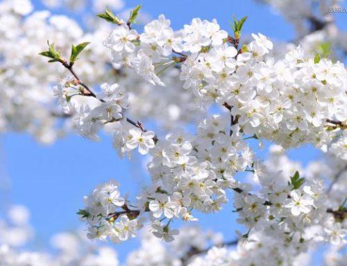 Майские праздники в Сочи